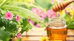 سعر عسل الصال